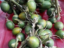 Bài thuốc chữa suy van tĩnh mạch – Giãn tĩnh mạch bằng quả cau ăn trầu.